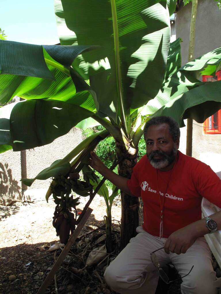 Abate Mollaw, Director of HR, is sure that SCiSS will flourish like the banana tree he planted just a year ago