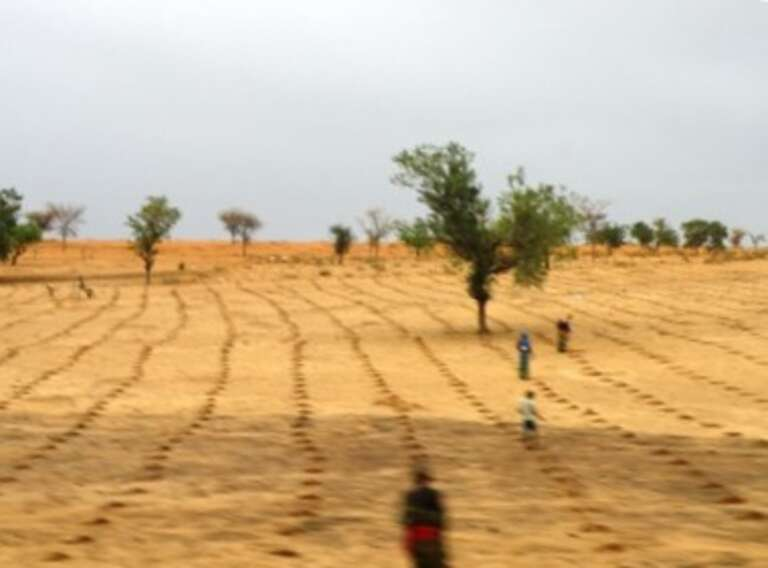 Newly cultivated fields that we passed on the drive back to Zinder town.