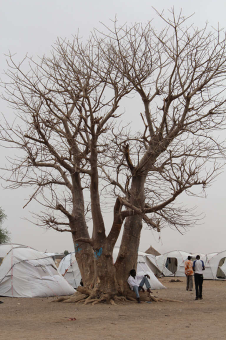 UNHCR tents in the Pariang Settlement for refugees from South Kordofan, Sudan. Save the Children is providing secondary school education and protection for over 1,000 students in Pariang who fled from Sudan into South Sudan due to fighting in the border areas.