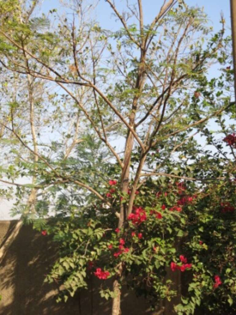 Flowers blossoming in the Maadi area